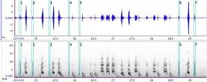 ソナグラム(音を視覚的に表す図)の一例