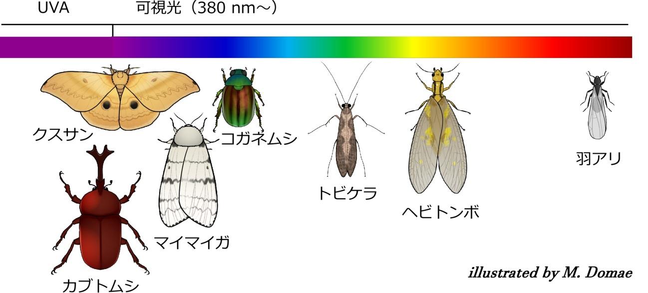 光嗜好性を利用した昆虫の行動制御 ~高速道路への飛来虫低減に期待~